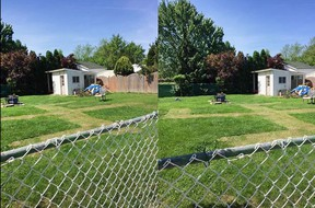 Two images provided to us by a reader shows a swastika mowed into the lawn in a backyard in Amherstburg, Saturday, June 6, 2020.  The symbol has since been removed as Windsor police from the Amherstburg detachment patrol the area.