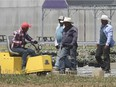 Migrant workers are shown at a greenhouse agri-food operation in Kingsville on June 25, 2020.