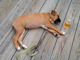 A puppy asleep by a glass of beer.