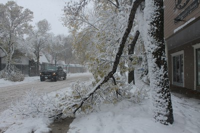 A winter storm that hammered much of southern Manitoba damaged trees in Morden, Friday, Oct. 11, 2019. Lauren MacGill/Postmedia Network