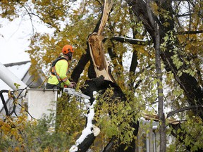 Crews cleanup after a snow storm which hit parts of Manitoba Thursday and Friday in Winnipeg on Sunday, October 13, 2019.