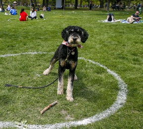 Enjoying the warm weather within the physical distancing circles at Trinity Bellwoods Park on Saturday, May 15, 2021.